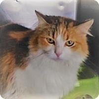 Adopt A Pet :: Rikki - Germantown, MD