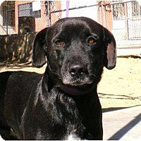Adopt A Pet :: Jose - Courtesy - Vancouver, BC
