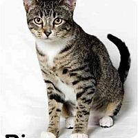 Adopt A Pet :: Pippa - Portland, OR