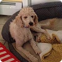 Adopt A Pet :: R.I.- ROXIE - W. Warwick, RI