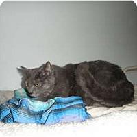 Adopt A Pet :: Chloe - Milwaukee, WI