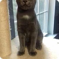 Adopt A Pet :: Paddington - McDonough, GA