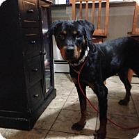 Adopt A Pet :: Tessa - Rexford, NY