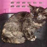 Adopt A Pet :: Prissy - San Bernardino, CA