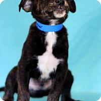 Adopt A Pet :: Ragner - Waldorf, MD