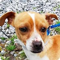 Adopt A Pet :: Thistle - New York, NY