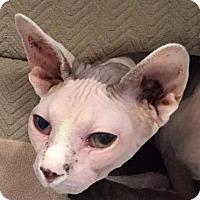 Adopt A Pet :: Azland - Freeport, NY