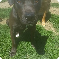 Labrador Retriever Mix Dog for adoption in Dayton, Ohio - Eileen