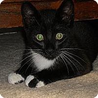 Adopt A Pet :: Leroy - Arlington, VA