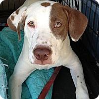 Adopt A Pet :: jagger - Wanaque, NJ