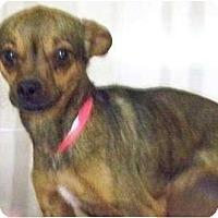 Adopt A Pet :: Echo - Phoenix, AZ