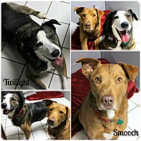 Adopt A Pet :: Twilight & Smooch - Forked River, NJ