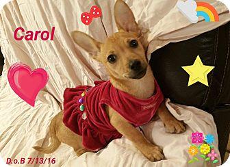 Pug/Dachshund Mix Puppy for adoption in LAKEWOOD, California - Carol