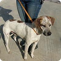 Adopt A Pet :: Sealy - Jacksonville, TX