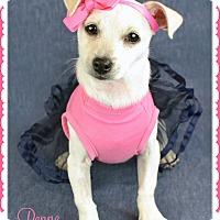 Adopt A Pet :: Penne - Phoenix, AZ