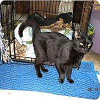 Adopt A Pet :: *Midnight - Winder, GA