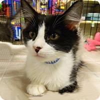 Adopt A Pet :: Jethro - The Colony, TX