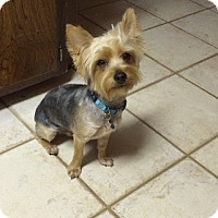 Adopt A Pet :: Lucas - Edmond, OK