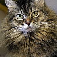 Adopt A Pet :: Midas - Portland, OR