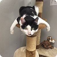 Adopt A Pet :: TAIL SPIN - Brea, CA