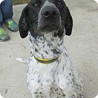 Adopt A Pet :: Bishop - Lake Odessa, MI