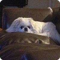 Adopt A Pet :: Nala - Portland, ME