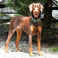 Adopt A Pet :: GRANT - Greensboro, NC
