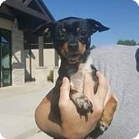 Adopt A Pet :: Reba - Laingsburg, MI