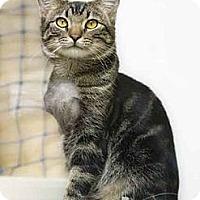 Adopt A Pet :: Luke - Phoenix, AZ