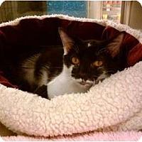 Adopt A Pet :: Tourisss - Cincinnati, OH