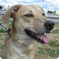 Adopt A Pet :: Kira - Beaumont, TX