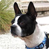 Adopt A Pet :: GIGI - North Augusta, SC