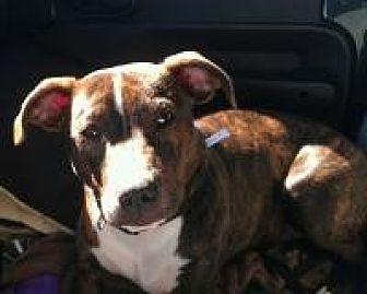 Terrier (Unknown Type, Medium) Mix Dog for adoption in Duluth, Georgia - Jethro