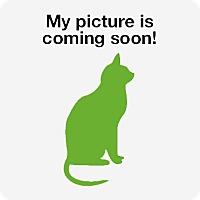 Domestic Shorthair Kitten for adoption in Rustburg, Virginia - A Shelter Cat/Kitten