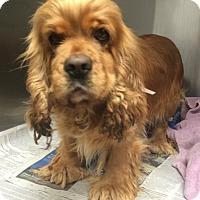 Adopt A Pet :: Jilly - Oak Ridge, NJ