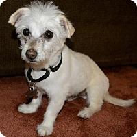 Adopt A Pet :: Dale - Kennesaw, GA