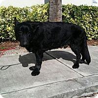 Adopt A Pet :: Owen - Cambridge, ON
