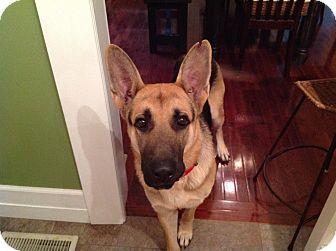 German Shepherd Dog Dog for adoption in Nashville, Tennessee - Cowboy-Chuck
