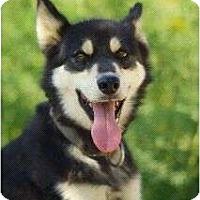 Adopt A Pet :: Mystery - Golden, CO