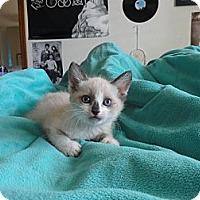 Adopt A Pet :: Bahama - Phoenix, AZ