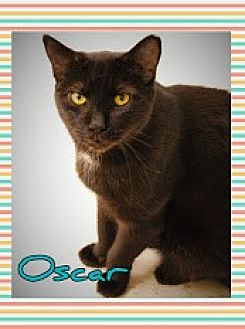 Domestic Shorthair Cat for adoption in Island Heights, New Jersey - Oscar