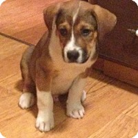 Adopt A Pet :: Kace - Louisville, KY