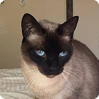 Adopt A Pet :: MiChow - Laguna Woods, CA