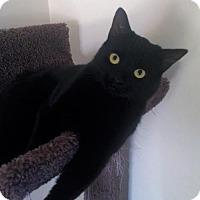 Adopt A Pet :: Vesper-*URGENT* - Richmond Hill, ON