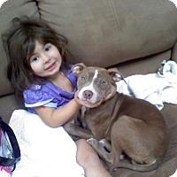 Adopt A Pet :: Evan - Framingham, MA