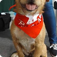 Adopt A Pet :: Kira - Pierrefonds, QC