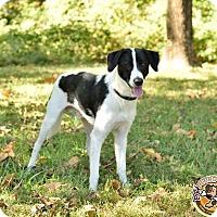 Adopt A Pet :: Dmitri - Mt. Vernon, IN