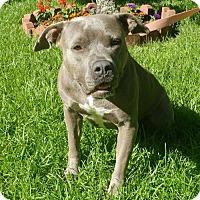 Adopt A Pet :: Sissy - Baton Rouge, LA
