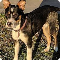 Adopt A Pet :: Wrigley - Billings, MT