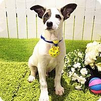 Adopt A Pet :: Kermit - Castro Valley, CA